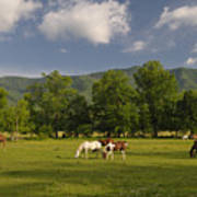 Cades Cove Horses In Smoky Mountains Tennessee Usa Art Print