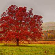 Cades Tree After The Rain Art Print
