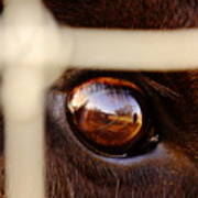 Caged Buffalo Reflects Art Print