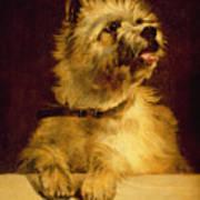 Cairn Terrier   Art Print by George Earl