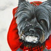 Cairn Terrier In The Snow Art Print