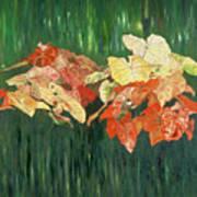 Caldium Forest Art Print