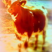 This Calf Has A Hope For A Long And Happy Life But How And When Will It End   Art Print