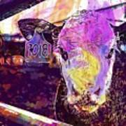 Calf Cow Maverick Farm Animal Farm  Art Print