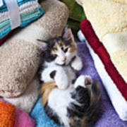 Calico Kitten On Towels Art Print by Garry Gay
