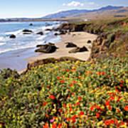 California Coast Wildflowers Vertical Format Art Print