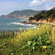 California Coast With Wildflowers And Fence Art Print