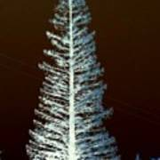 California High Sierra Pine Tree Art Print