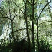 California Jungle Art Print
