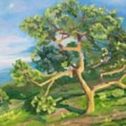 California Oak Art Print