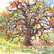 California Oak In Winter Art Print