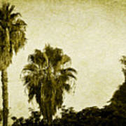 California Palms Art Print