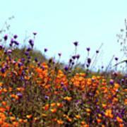 California Poppies And Wildflowers Art Print