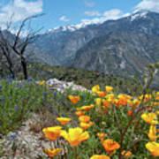 California Poppy And Mountain Panorama Art Print