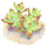 California Sunset Succulent Art Print