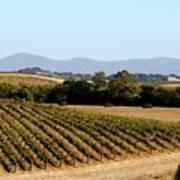 California Vineyards Art Print