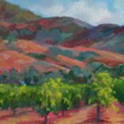 Calistoga Vineyards  Art Print