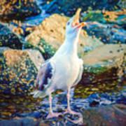 Call Of The Gull Art Print