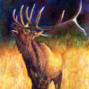 Call Of The Wild Elk Art Print