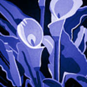 Calla Lilies Royal Art Print