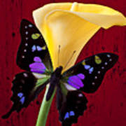 Calla Lily And Purple Black Butterfly Art Print by Garry Gay