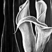 Callas Lilies Trio Art Print