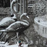 Callaway Mallard Ducks Art Print