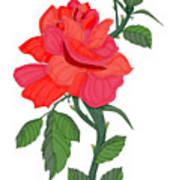 Calypso Rose Art Print