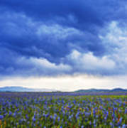 Camas Glory At Camas Prairie In Idaho Art Print
