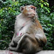 Cambodia Monkeys 2 Art Print