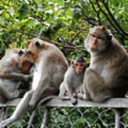 Cambodia Monkeys 5 Art Print