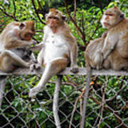 Cambodia Monkeys 7 Art Print