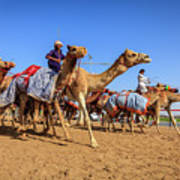 Camel Racing In Dubai Art Print