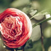 Camellia 3 Art Print