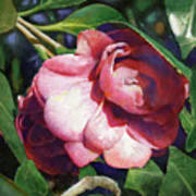 Camellianne Art Print