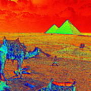 Camels At Giza Art Print