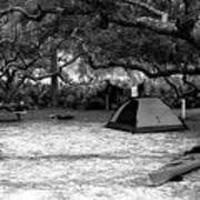 Camp Under Live Oaks Art Print