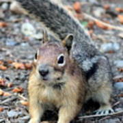 Campground Chipmunk Art Print