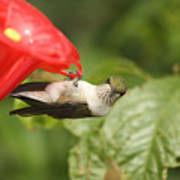 Can I Help You Hummingbird  Art Print