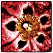 Can You Guess What Flower? Hints: It's Art Print