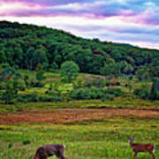 Canaan Valley Evening Art Print