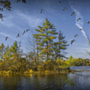 Canada Geese Flying By A Small Island On Hall Lake Art Print