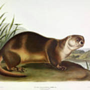Canada Otter Art Print