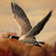 Canada Air Art Print