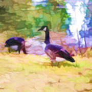 Canadian Geese In The Park 3 Art Print