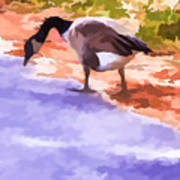 Canadian Geese Art Print