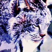 Canadian Lynx 1 Art Print
