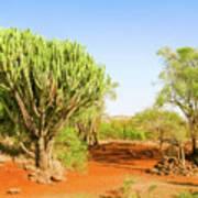 candelabra euphorbia tree Euphorbia candelabrum, Kenya Art Print