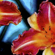 Candied Daylilies 1230 Dp_2 Art Print