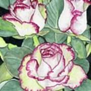 Candy Cane Roses Art Print